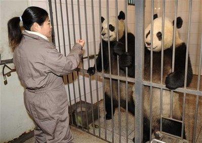 China Taiwan Pandas