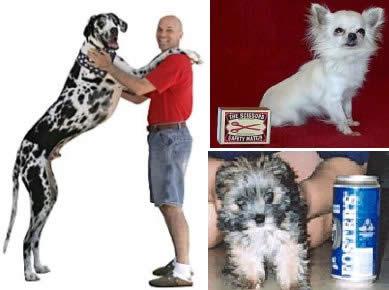 gibson-perro-mas-alto-mundo