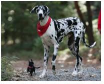 gibson-perro-mas-alto