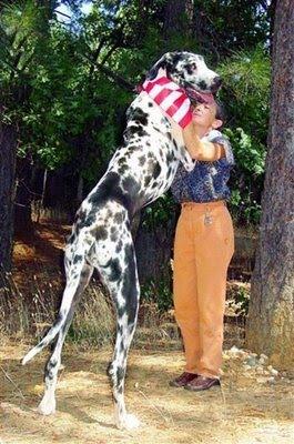 perro alto 2