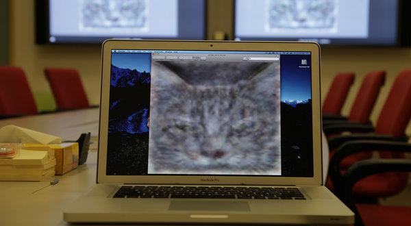 CATS-articleLarge