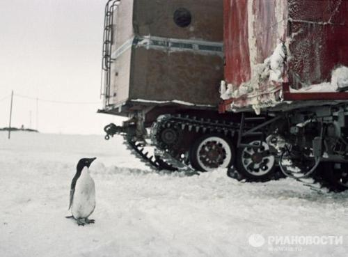 Penguin looking at all-terrain tracked carriers in Antarctica. 1967.