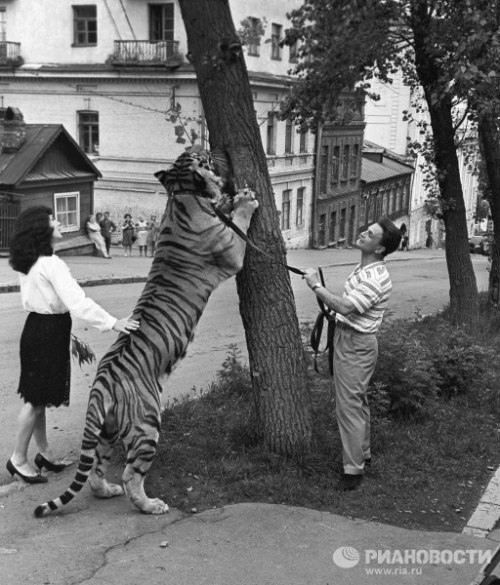 Soviet animal trainers Maritsa and Walter Zapashny and Typhoon the tiger in Vladivostok. 1968.