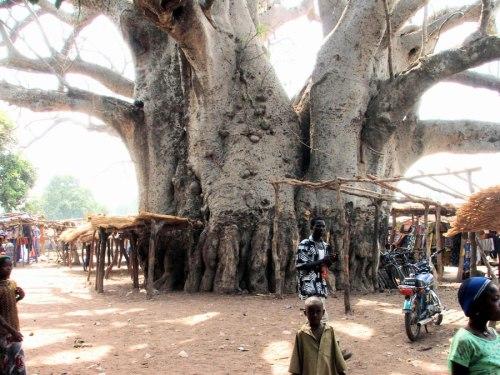 baobab_supply_legends3
