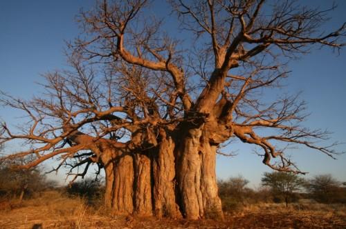 Swartwater-Tree-June-2008-Resized