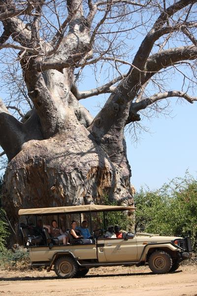zambia-baobab