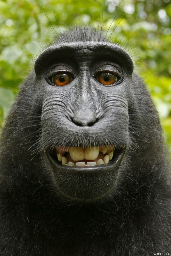 Monkey takes photos on camera