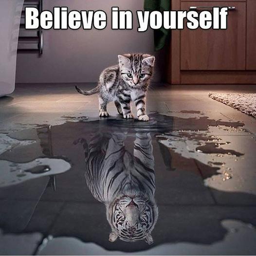 8 Gato-Tigre
