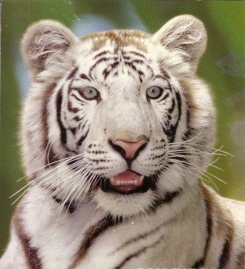 2 Tigre CTsT