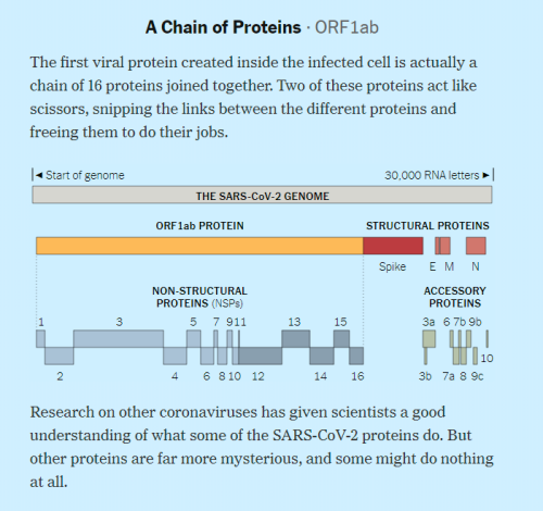 a CHAIN OF PROTEINS